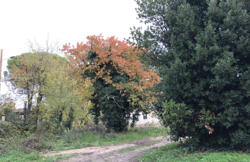 Buildable land 655 m² in vibrant village - Set Immo